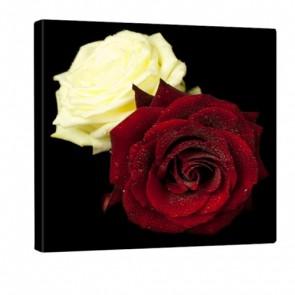 Double Rose Leinwandbild 80x80cm
