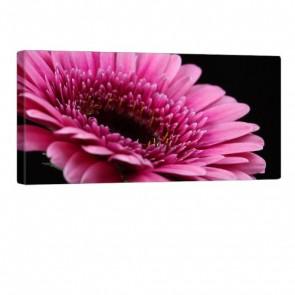 So Pink Leinwand Druck 100x50cm