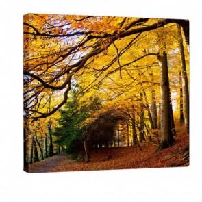 Autumn Feeling Leinwand Druck 80x80cm