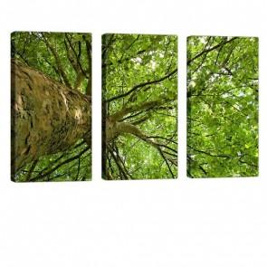 Gigantic Green Leinwand Bild 3x 40x80cm