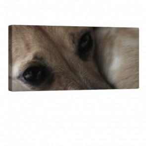 Dogs Mind Leinwanddruck 100x50cm