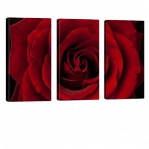 So Red Leinwand Bild 3x 40x80cm